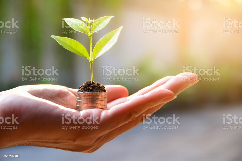 Concept of money with plant growing from coins in hand. stock photo