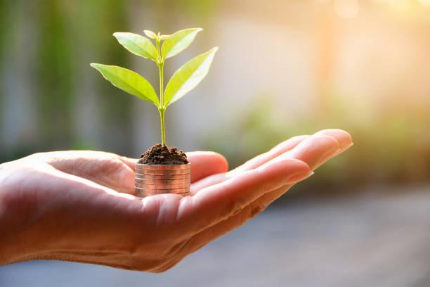 Konzept des Geldes mit Pflanze wächst von Münzen in der hand. – Foto