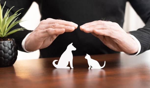 Concept of pet insurance stock photo