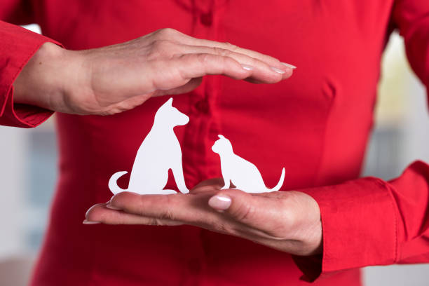 Concept of pet insurance stock photo