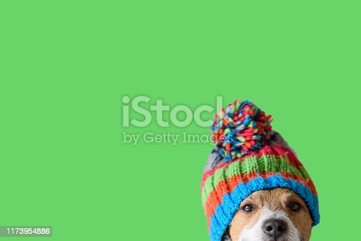 istock Concept of pet ready for cold winter weather with dog wearing warm knitted hat 1173954886