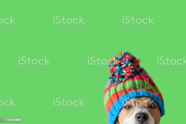 Concept of pet ready for cold winter weather with dog wearing warm picture id1173954886?b=1&k=6&m=1173954886&s=612x612&h=xjmuixeunjc9savek3u 7wsffypbekzfbuxjmft luk=