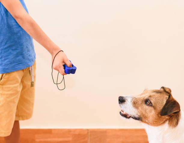Concept van positieve versterking Dog Training met Kid met behulp van Clicker voor gehoorzaamheid oefening foto
