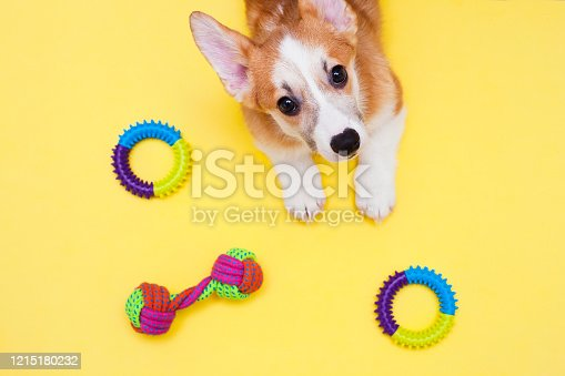 Corgi dog, toys, accessories and dry food on the yellow background. Top view. Space for a text.