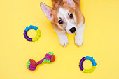 istock Concept pet care, playing and training 1215180232