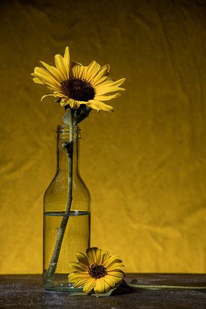 Concept photo of two sunflowers. stock photo