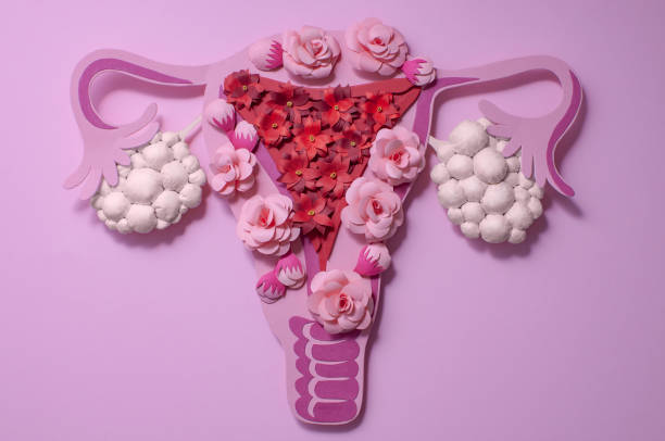 concept polycystic ovary syndrome, pcos. women reproductive system. - cyst stock pictures, royalty-free photos & images