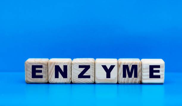 concept word enzyme on cubes on a blue background - enzym zdjęcia i obrazy z banku zdjęć