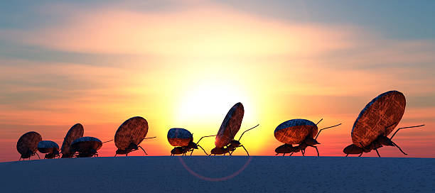concept work, team of ants - ants working together stock photos and pictures