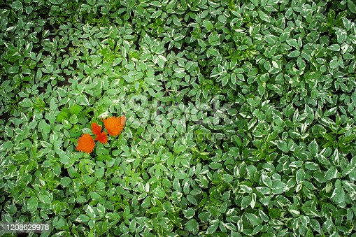 Conception for business  - lidership or diversity, inclusion, adoptation in a team, challenge. Red leaf on the green leaves background.