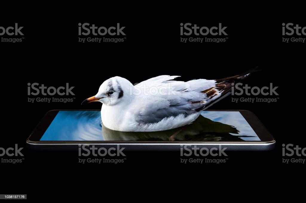 A Conceptual Creative 3d Volumetric Photo Of A Bird Floating