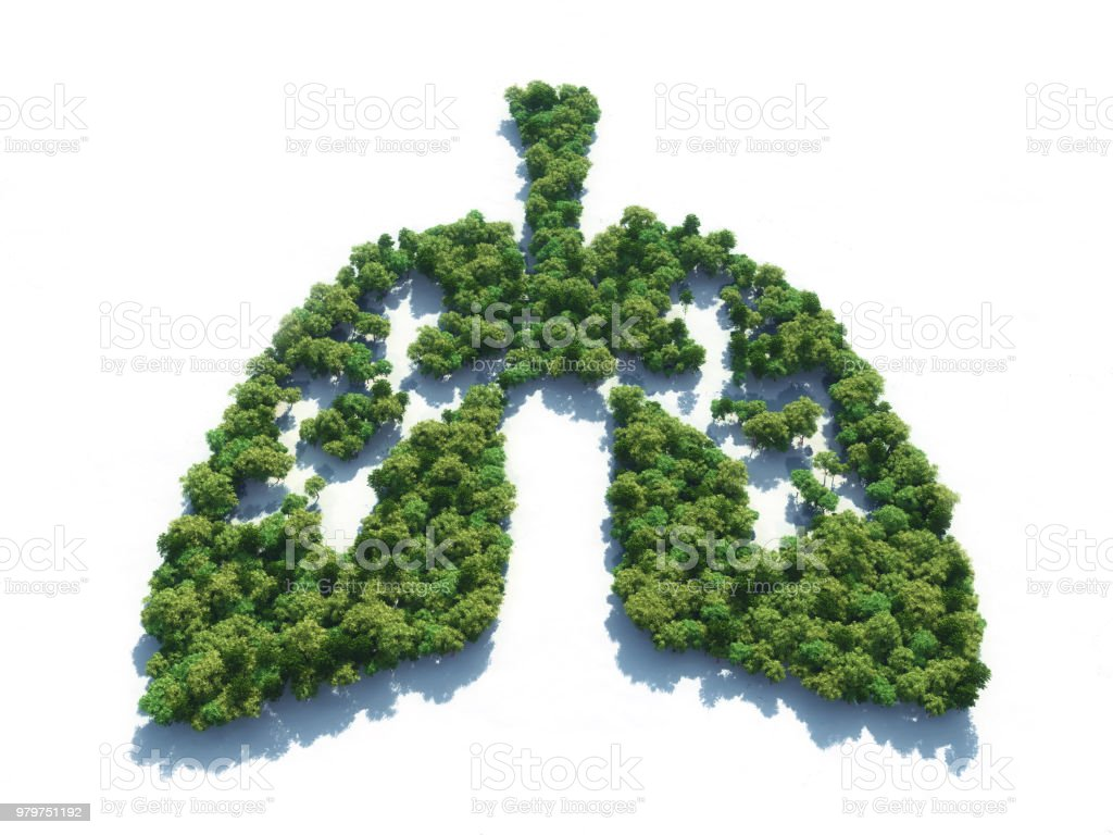 Conceptual image of a forest in shape of lungs stock photo