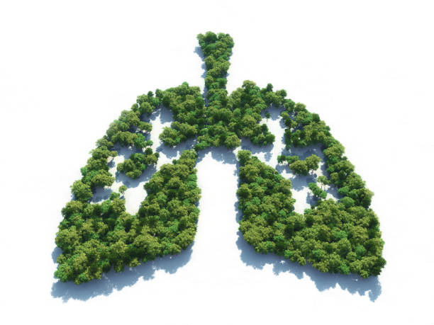 Conceptual image of a forest in shape of lungs Conceptual image of a forest in shape of lungs - 3d illustration alveolar duct stock pictures, royalty-free photos & images