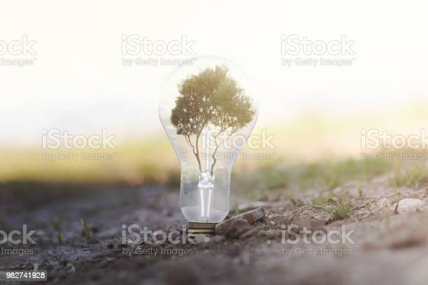 Conceptual image of renewable energy a light bulb planted on the a picture id982741928?b=1&k=6&m=982741928&s=612x612&h=53valmvtf67ykhumtlqut nfzc2i36iqpxmxen8zlfq=