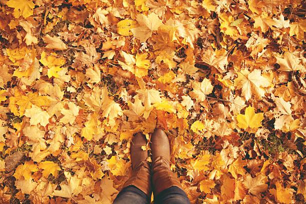 개념 레그스 in boots on 가을 낙엽. 피트 신발도 walkin 스톡 사진