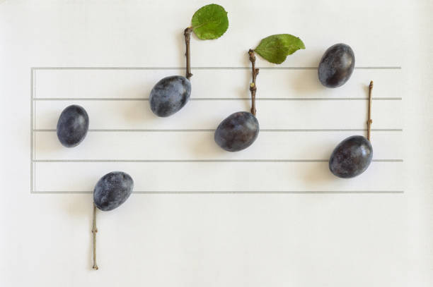 Conceptual Music Notes From Ripe Plums stock photo