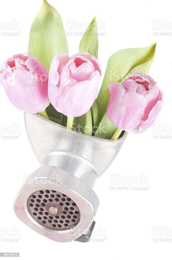 개념 포토서제스트 꽃을 royalty-free 스톡 사진