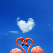 Conceptual two flamingos over blue sky with heart shaped cloud
