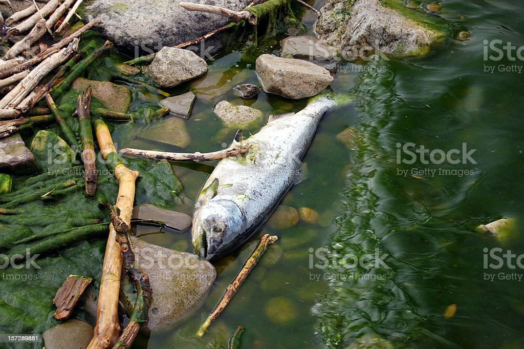 Concern for the Environment, Dead Fish, Pollution, Nature royalty-free stock photo