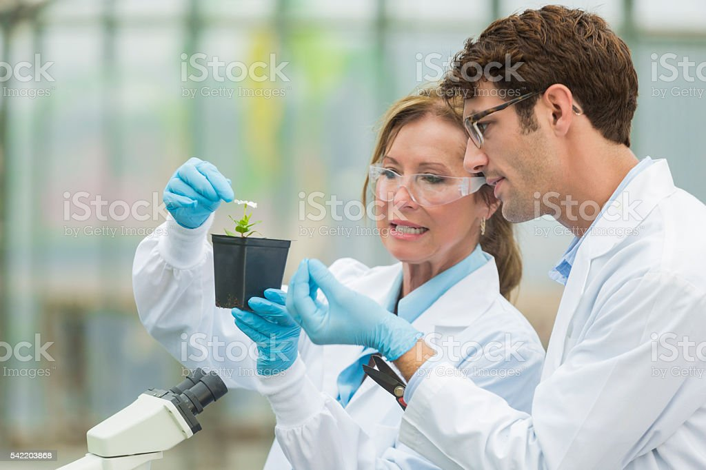 Concerned biologists at work stock photo