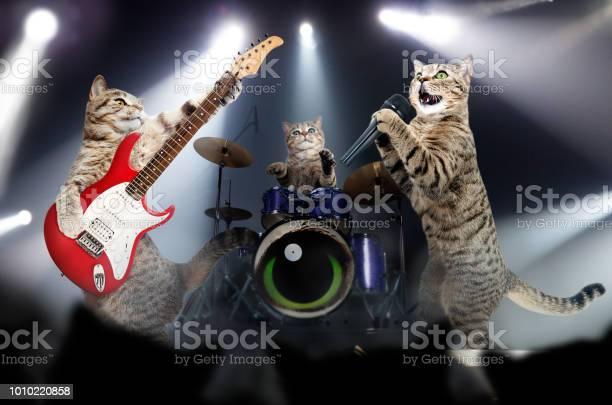 Concert of cats musicians picture id1010220858?b=1&k=6&m=1010220858&s=612x612&h=arqyjnri0vdc7y87vt6vi5anqs94b4hkb4dhguipm8q=