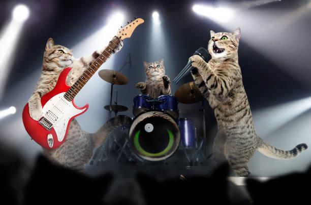 Concert of cats musicians picture id1010220858?b=1&k=6&m=1010220858&s=612x612&w=0&h= ahz zp6jqkionves6tpw9ynmzauq1eroiazmukczuy=