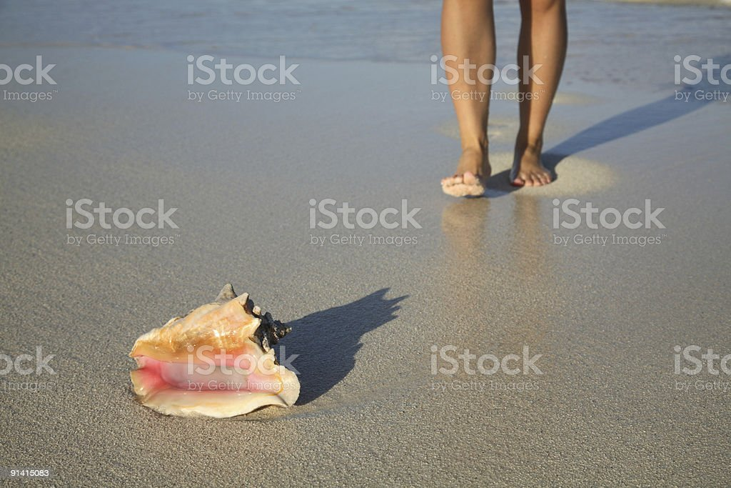 Conch on Carribean beach royalty-free stock photo