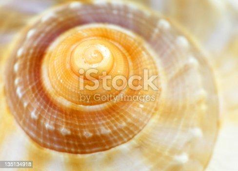 Macro on the shell of a marine mollusk.
