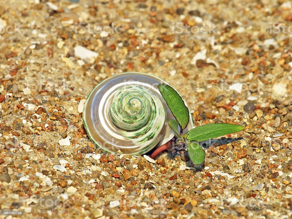 Conch shell and green sprout on sand. stock photo