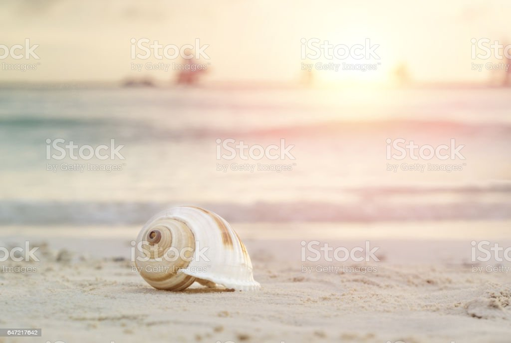 Conch shell in sand on tropical beach stock photo