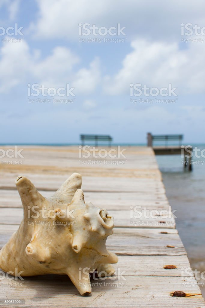 Conch Shell on a Dock stock photo
