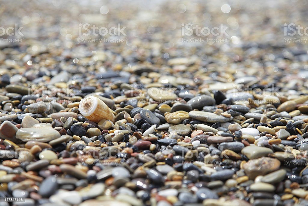 Conch shell royalty-free stock photo
