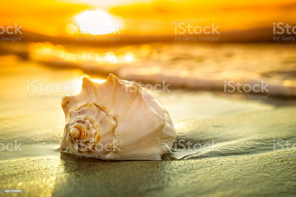 Conch shell, sunrise and ocean waves Dramatic sunrise or sunset with a close-up of a colorful shell. 2015 Stock Photo