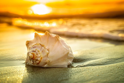 Conch Shell Sunrise And Ocean Waves Stock Photo - Download Image Now