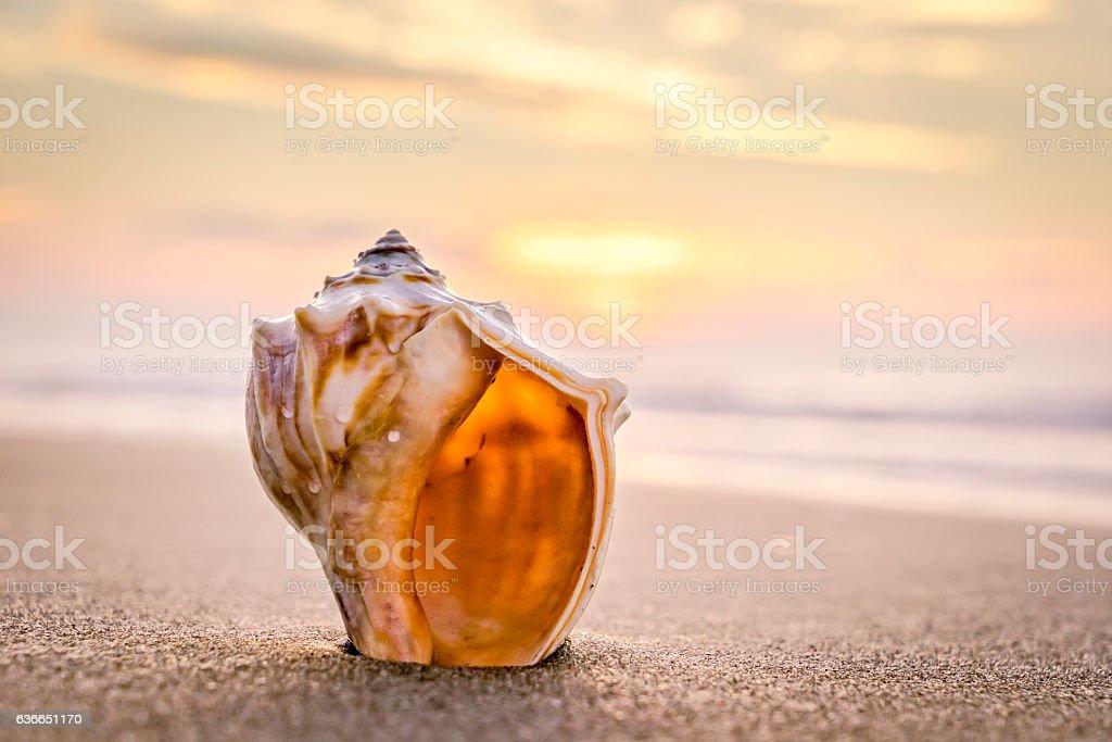 Conch shell, sunrise and ocean waves stok fotoğrafı