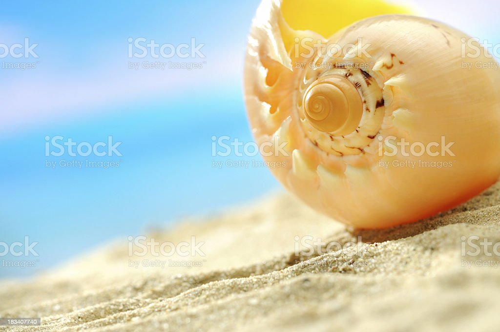 Conch shell with copy space royalty-free stock photo