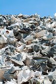 Piles of huge conch shells at the beach of Lac Cai,  Bonaire, Dutch Caribbean