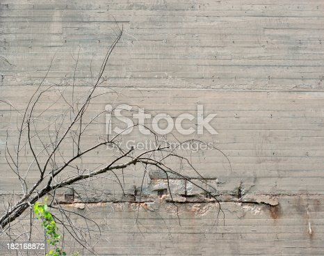 Tree against concrete background