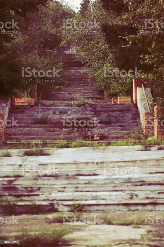 Concrete grassy stairway in the old urban park royalty-free stock photo