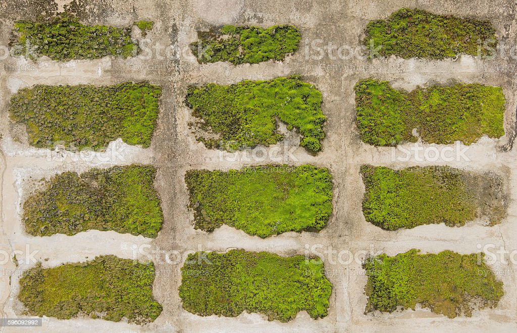 Concrete moss wall background. royalty-free stock photo