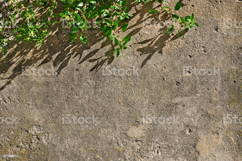 Concrete old wall with branch of tree stock photo