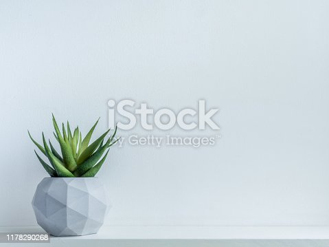 Concrete pot. Green succulent plant in modern geometric concrete planter on wooden shelf isolated on white background with copy space.