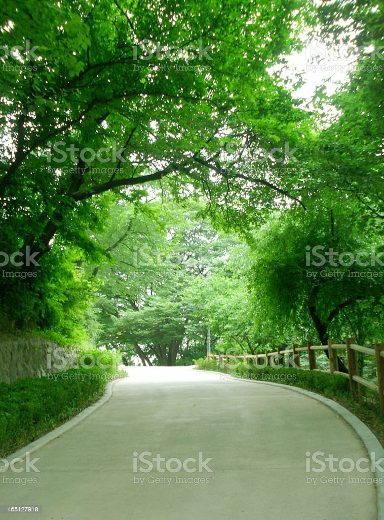 concrete road trough the forest stock photo
