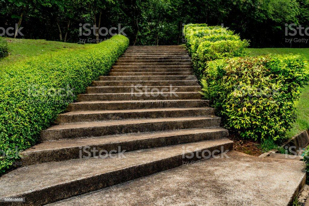綠色植物的混凝土樓梯 免版稅 stock photo