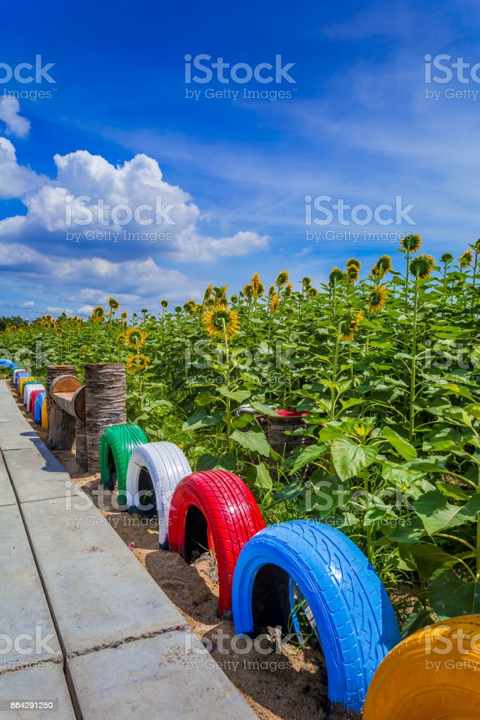 A concrete walkway with beautifully painted tires and sunflowers. royalty-free stock photo
