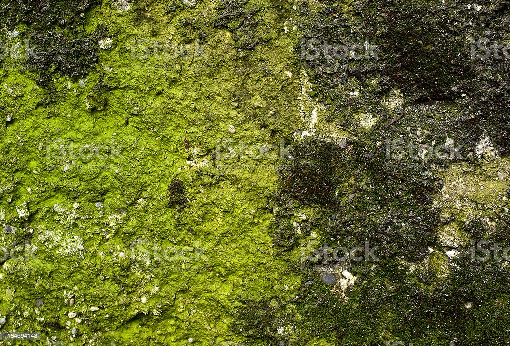 Concrete wall covered with moss royalty-free stock photo