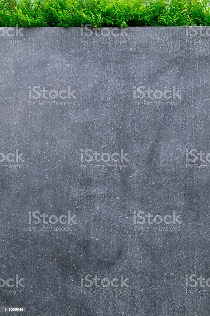 Concrete wall or marble wall and ornamental plants or ivy or garden tree. stock photo