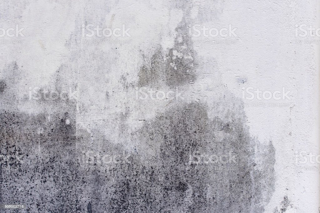 Concrete Wall with dirty staines and funguses as background stock photo