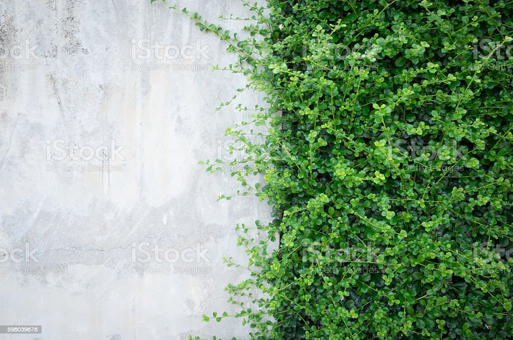 Concrete wall with ornamental plants. stock photo