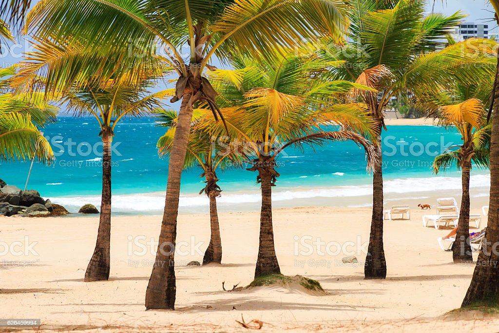 Condado palm beach stock photo